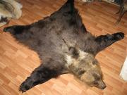 Ковер из шкуры медведя 175 см.